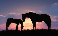 Framed Print - Mother Horse with Her Foal on a Hill at Sunset (Picture Poster)