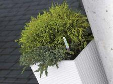 medium White Square Plant Flower Pot Garden Home Holder Pots Planter Herb 20cm