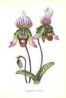 SLIPPER ORCHID FLOWER Plant ~ 1958 Floral Botanical Garden Greenhouse Art Print