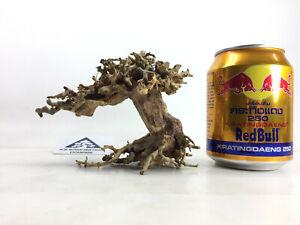 Bonsai Moss Tree Real Driftwood Natural Decor for Freshwater Aquarium Random-2