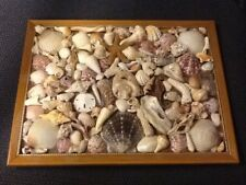 """VTG. Shell encrusted framed pic on board collage measures 13"""" by 10"""" beach decor"""