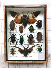 Insect Display Box Tarantula Spider Scorpion Beetle Bug Taxidermy Wood Case S