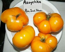 Marglobe Tomato Seeds S//H See our store for 600 kinds of heirlooms! Comb