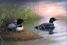 "4 ""New Expectations"" Loons 26x16 Canvas Print by Robert Metropulos"