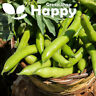20 seeds - BROAD BEAN - BISON - Fava beans Vicia Fava - Easy to Grow