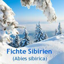 ***ätherisches Fichtennadelöl, naturrein, 30ml Sibirien/GUS - Topp-Sauna  - Öl