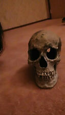 Skull for fish tank or display