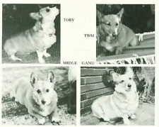 Dog Book 1982 Pembroke Welsh Corgi Story CERIDWEN