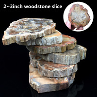 Natural Polished Microsection Petrified Wood Quartz Crystal Gift Healing 1PC