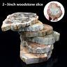 Natural Polished Microsection Petrified Wood Quartz Crystal Gift Healing 1PC