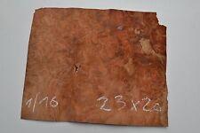 Loupe D'amboine 23 x 20 cm  ép 0.6mm (placage bois prcieux amboina masser ) ib