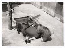 PHOTO ANCIENNE Animal Deux Ours ZOO Vers 1960 Vintage Print