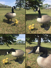BIGFOOT CANADA GOOSE DECOY YARD LAWN ART DECOR ORNAMENT+1 GOSLING NEW!