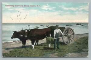 Man Gathering Seaweed BLOCK ISLAND RI Rhode Antique Aquaculture Occupation 1911