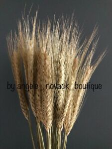 25PCS STEMS DRIED WHEAT/RYE BUNCH WEDDING FLOWERS ARRANGEMENT NATURAL BOUQUET
