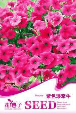 1 Pack 60 Petunia Seeds Petunia Hybrida Vilm Purple Petunia Garden Flowers A241