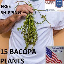 15 Bacopa plants live aquarium plants aquascaping planted tank beginner easy