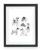 Wire Fox Terrier Picture Print Wall Art Poster Gift Vintage 1930's Reprint A4