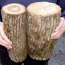 2 Large Oregon White Oak Logs For Growing Mushrooms from Plugs Shtitake Others