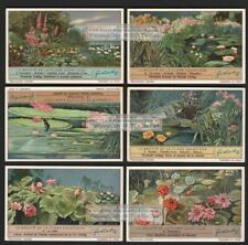 New listing Aquatic Water Pond Plants 6 1930s Trade Ad Cards