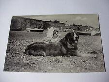K251 - c1905 ST BERNARD DOG & BABY on Beach POSTCARD - Silverette Tucks RP