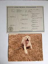VTG Labrador Retriever Dog AKC Pedigree Papers Certificate Photo WHITE HOPE Rela