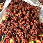 20-PODS-Dried-ORGANIC-Carolina-Reaper-Peppers-World--Hottest-Chili-PODS-W/SEEDS