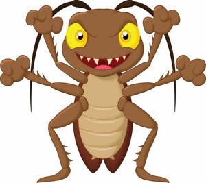 Blaptica Dubia Roach Large XXL / SUBADULT size 3-4cm