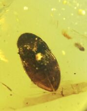 Beetle inclusion in Burmite Amber Fossil Genuine