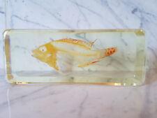 Echtes Fisch- Skelett Präparat in Kunstharz (T-FIS-010)