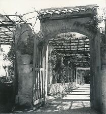 NICE c. 1935 - Cimiez Pergola du Jardin du Monastère Alpes-Maritimes - Div 7550