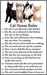 Cat Lover - Cat House Rules - Flexible Magnet Sticks to any flat metal surface.