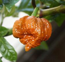TRINIDAD MORUGA SCORPION CARAMEL pure seeds