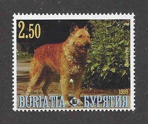Dog Photo Body Study Postage Stamp BELGIAN SHEEPDOG LAEKENOIS Buriatia 1999 MNH