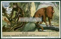 Capuchin And Red Howler Monkey Primate Ape 50 Y/O Trade Ad Card