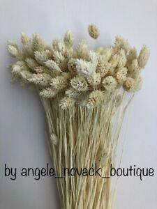 """80 GRAMS BUNCH DRIED PHALARIS WEDDING FLOWERS ARRANGMENT BLEACHED UP TO 16"""""""