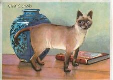 IMAGE CARD Chat Siamois Siamese cat Siamkatze Animal  1951