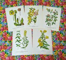 Wild Flower Prints to Frame Set of 5 Book Botanical Prints