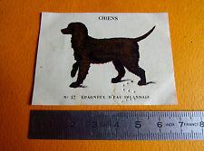 CHROMO 1939 CASINO LES CHIENS N°12 EPAGNEUL D'EAU IRLANDAIS CHASSE
