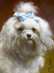 Maltese with Blue Bow Head Study Dog Puppy Dogs Puppies Vintage Art Poster Print