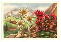 CPA Fantaisie Fleurs de Montagne Edelweiss et Joubarde
