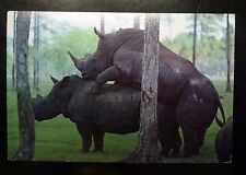 {BJSTAMPS}  Postcard of Black Rinos Mating 1981 American Postcard Co.