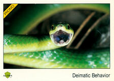 Rare 1991 Acorn Biosphere Promo Card 80 Deimatic Behavior - Smooth Green Snake