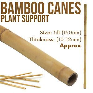 5FT Plant Support Bamboo Garden Canes Strong Thick Quality Heavy Duty Sticks UK