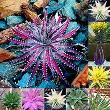 Usa Seller 200Pcs Rare Aloe Vera Seeds Succulent Herbal Garden Odd Colors