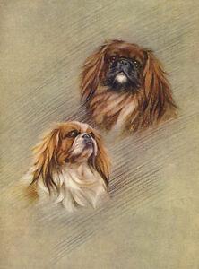 PEKINGESE CHARMING DOG GREETINGS NOTE CARD TWO DOGS BEAUTIFUL HEAD STUDY