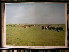 Crocifissi Immagine Muro Immagine immagine bovina bovini mandria Argentina Pampa Sud America 72x51c