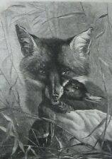 Fox and duck....wood engraving...1870s