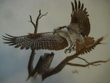 "Osprey Art PRINT Don Balke vtg 70s Wildlife Accents 14"" x 11"" Bird unframed"