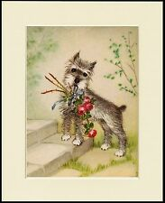 SCHNAUZER LITTLE DOG WITH FLOWERS LOVELY PRINT MOUNTED READY TO FRAME